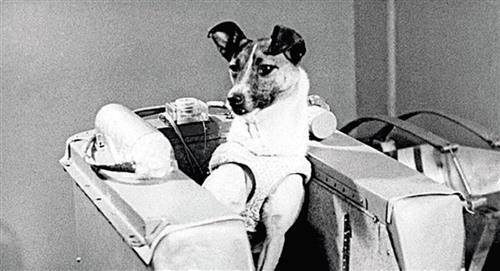 La triste histoire de Laika, le premier animal envoyé dans l'espace