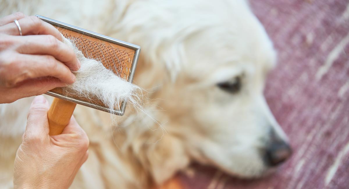 Il est recommandé de peigner votre chien tous les jours. Photo: Shutterstock