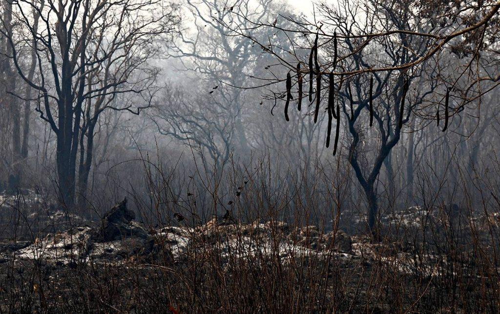 Mario Friedlander brûlé dans la brousse