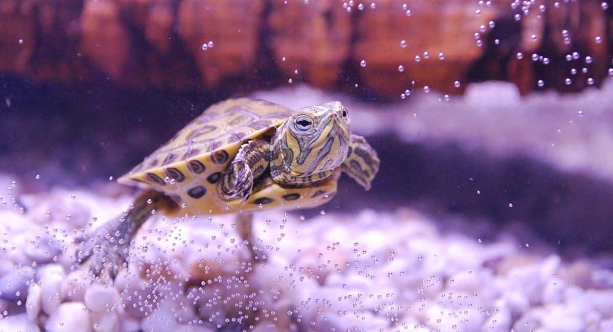 La tortue ne tombera pas malade si elle a un endroit hygiénique et confortable pour vivre. Photo: Pixabay