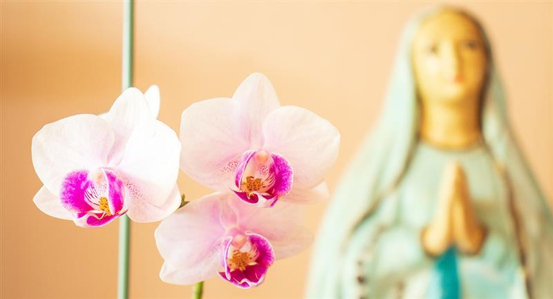 Le 8 septembre, la naissance de la Vierge Marie est commémorée.  Photo : Shutterstock